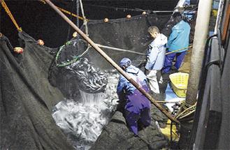 定置網漁の様子(提供写真)