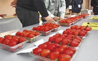 持ち寄られたイチゴを評価する審査員