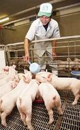 「やまと豚」 安全お墨付き
