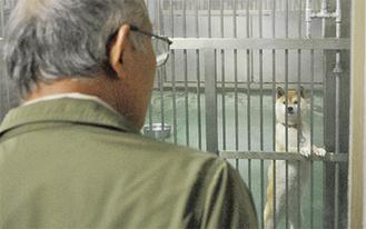 保護された犬が参加者をさみしげに見つめていた