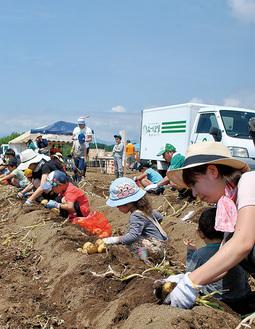 収穫作業を楽しむ親子