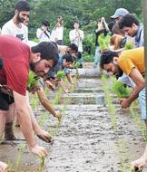 UAE学生が田植え