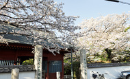 平塚八景を巡ろう