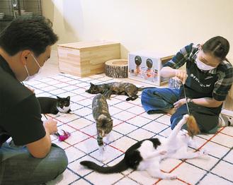 カフェで猫と触れ合う来店者