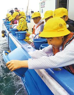 稚魚を放流する児童ら