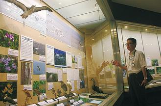 野鳥の標本なども多数展示