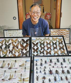 渡辺さんと昆虫標本の一部