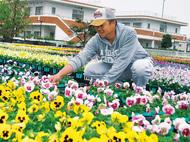 鮮やか 冬の花壇彩る