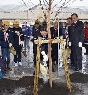 桜の苗木に盛り土を行う栗原会長