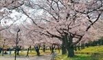 市総合公園(4月3日撮影)