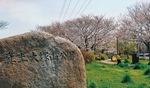 真土大塚山公園(4月2日撮影)