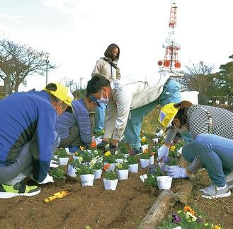 パンジーの苗を植える参加者