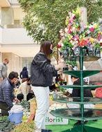 平塚産の花PR