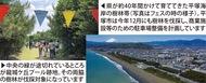 平塚市は木を切らないで
