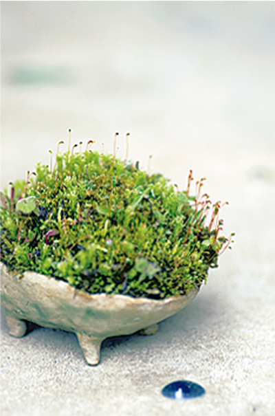 山野草の魅力凝縮