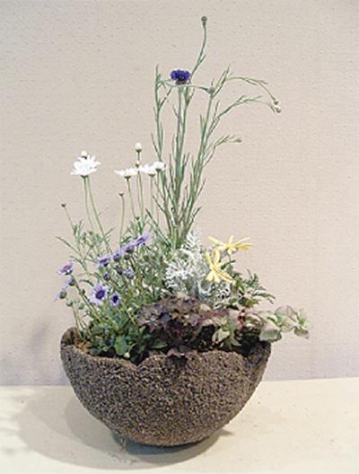 春の寄せ植え作り