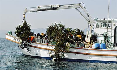 平塚沖に間伐材の漁礁