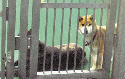 犬の殺処分ゼロを記録