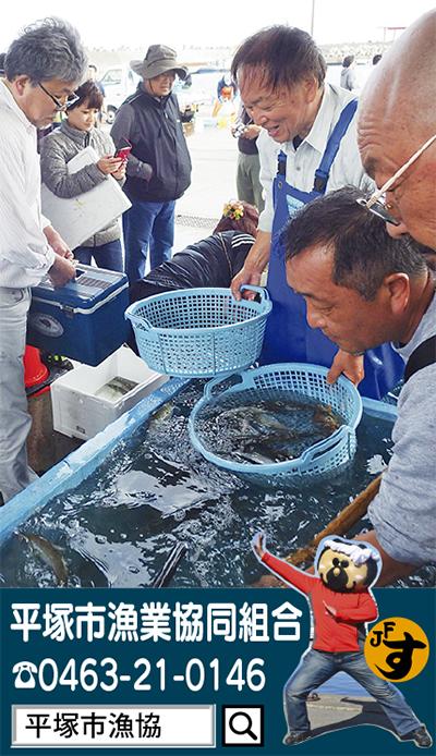 平塚のお魚を食卓へ