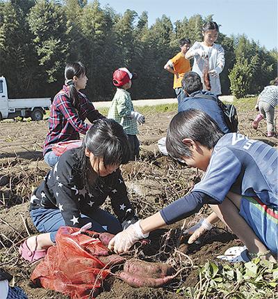 「さつま芋」大収穫に笑顔