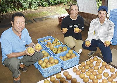 湘南梨を手にする(左から)伊藤さん、齋藤さん、横山さん