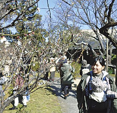 松籟庵の庭園11日 梅まつり