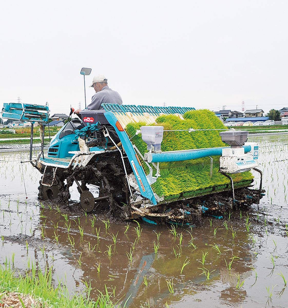苗青々 田植えシーズン