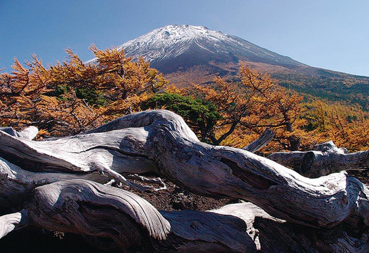 富士と日本の風景