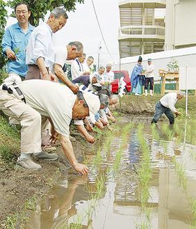 神饌田に苗を植える神社の役員たち