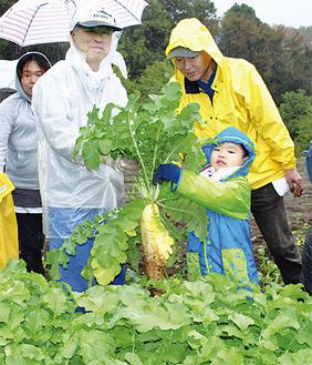大きく育った大根を収穫する参加者