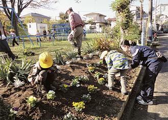 パンジーを植える児童たち