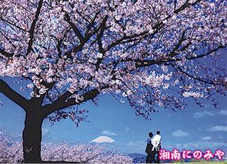 吾妻山の桜と富士を写した「桜日和」