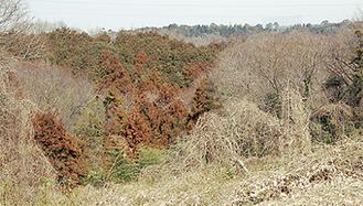 調査が行われた中井町南部地区の山林