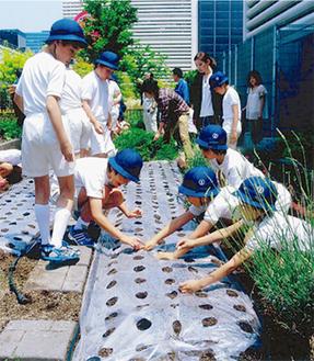 落花生を植える児童たち
