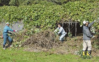 蔓や枯れ枝を取り除く参加者