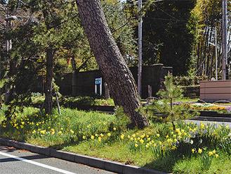 春の訪れを告げる黄色い花々