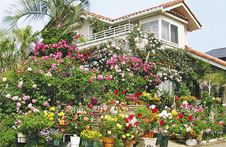 南欧風のバラが香る庭(過去の様子)