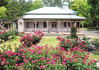 旧横浜ゴム記念館のバラ