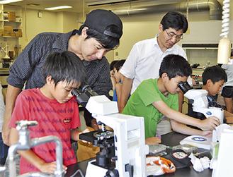 顕微鏡で微生物を観察する小学生