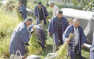 神饌田の稲を刈る神社役員