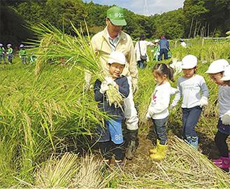 刈り取った稲を運ぶ園児