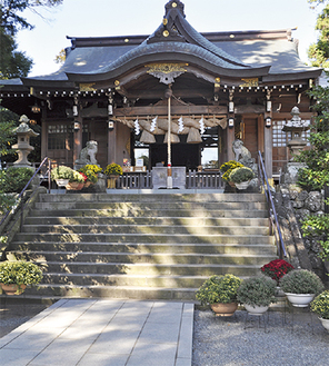 社殿前に並べられているざる菊(10月26日撮影)