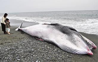 打ち上げられたクジラ