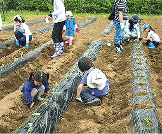 農作業を体験