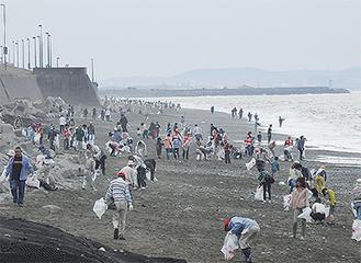 海岸を清掃する参加者(昨年)