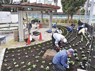 園内にパンジーを植える参加者