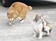 「地域猫」との共生めざす