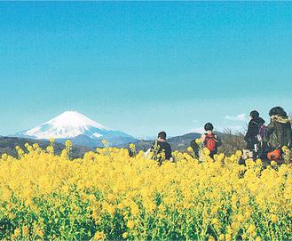 二宮町の吾妻山公園(町観光協会提供)