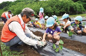 シルバー人材センターの会員と園児が苗を植えた=5月31日・大磯町生沢