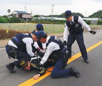 訓練で犯人役を取り押さえる警察官     =大磯町西小磯